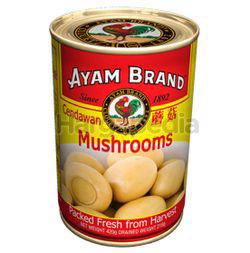 Ayam Brand Button Mushroom 420gm