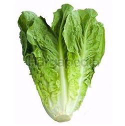 Baby Romaine Lettuce 1kg